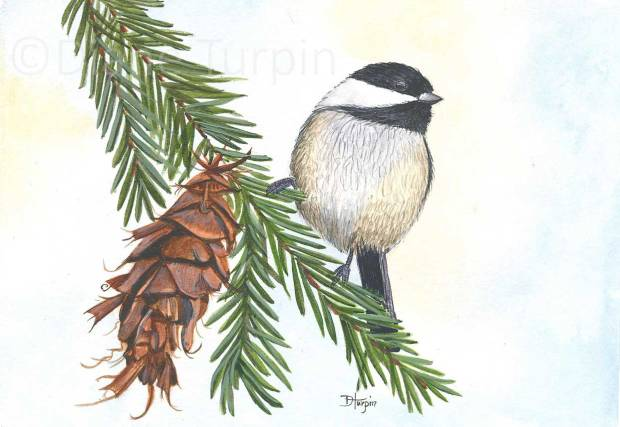 Chickadee-on-a-pine-branch--web